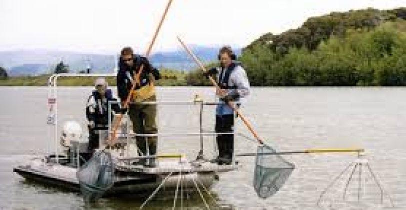 La pêche électrique