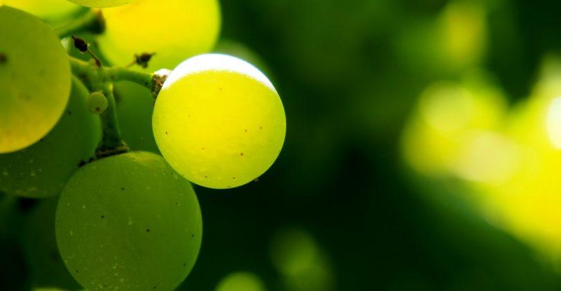 Zoom sur les séjours et circuits touristiques vinicoles et œnologique