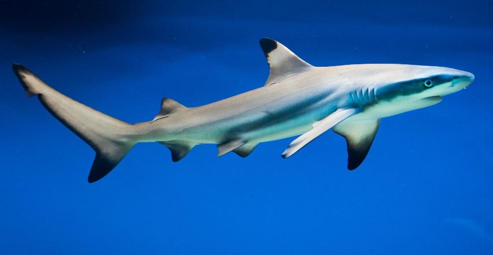 Le requin est-il un poisson ou un mammifère: comment reconnaître facilement les différentes grandes familles d'animaux?